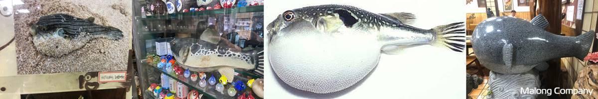 [FRP 모형 조형물 복어 간판 제작 사례] 식당 마스코트 복어 물고기 FRP 조형물